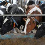 В Нижнетавдинский район отправлена крупная партия семенного материала для разведения коров