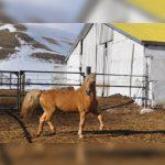 Татарская лошадь официально зарегистрирована в качестве отдельной породы